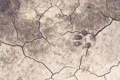 Chapped ground with dog track Stock Images