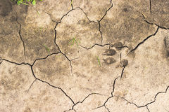 Chapped ground with dog track Stock Photo