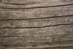 Chapped oak wood  texture Stock Photos