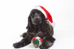 Chapéu do Natal Fotos de Stock