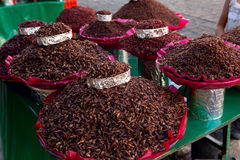 Chapulines de Oaxaca foto de archivo