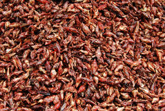 Chapulines enchilados, edible grasshoppers with chili Stock Image