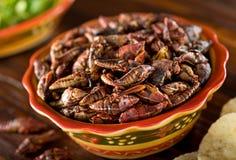 Chapulines Fried Mexican Grasshoppers fotografia stock libera da diritti
