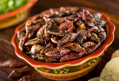 Chapulines Fried Mexican Grasshoppers. A bowl of healthy nutritious mexican grasshopper chapulines Royalty Free Stock Photography