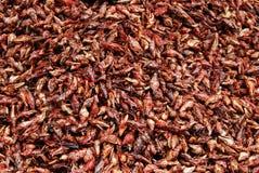 Chapulinesenchilados, eetbare sprinkhanen met Spaanse peper stock afbeelding