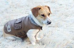 Chaqueta del perro fotografía de archivo libre de regalías