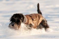 Chaqueta del perro imagen de archivo libre de regalías