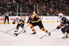 Chara de Zdeno, Boston Bruins Fotografia de Stock
