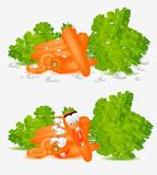 Character isolated carrot hero Stock Image