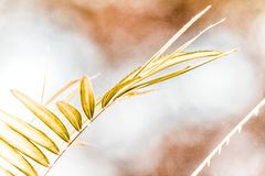 Character of The Palm Tree Leaves stock images