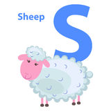 Character S Cheerful Sheep on ABC for Children. Isolated on white. Curly lamb with pink face on alphabet kids icon. Vector illustration for kindergarten or Stock Photos