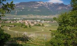 Characteristic circular vineyard in the South Tyrol, Egna, Bolzano, Italy on the wine road. Royalty Free Stock Photos
