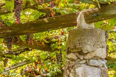 A   characteristic pylon stone and lime of the vineyards of the famous Piedmontese wine Nebbiolo Carema D.O.C Italy. They  store the heat of the sun and release Royalty Free Stock Photography
