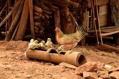 charakterów rozochoconych kurczaka Easter rodzinnych powitań szczęśliwa ilustracyjna pocztówka symbolizuje Obrazy Stock