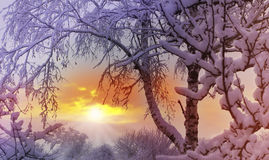 charakter leśna zimy słońca Fotografia Royalty Free