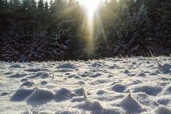 charakter leśna zimy słońca Obraz Royalty Free