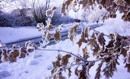 charakter leśna zimy słońca Zima lasu krajobraz w wczesnego zima ranku deciduous mroźnej trawie pod zima opadem śniegu i ciepłym  Obraz Royalty Free