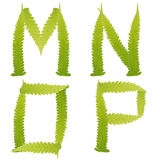 charakteru paproci zieleń odizolowywający liść Obraz Stock