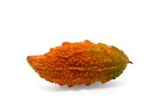 Charantia del Momordica (melone amaro) Fotografie Stock Libere da Diritti
