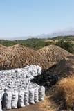 Charbon de bois brûlant 1 Photo stock