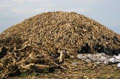Charbon en bois Photographie stock libre de droits