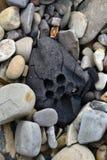 Charbon parmi des cailloux sur le rivage Photos stock
