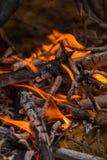 Charbons brûlants dans le feu images libres de droits