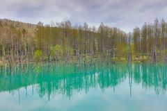 Charca azul Aoiike, Biei Hokkaido Japón Foto de archivo libre de regalías