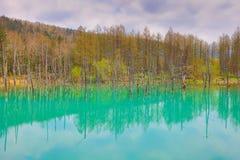 Charca azul Aoiike, Biei Hokkaido Japón Fotos de archivo libres de regalías