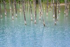 Charca azul, Biei, Hokkaido, Japón Fotos de archivo