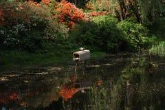 Charca, casa del pato y patos hermosos Foto de archivo libre de regalías
