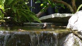 Charca con la cascada Imagen de archivo