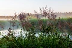 Charca con la hierba en niebla imágenes de archivo libres de regalías