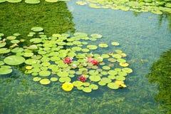 Charca con los lirios de agua en el parque Imagen de archivo libre de regalías