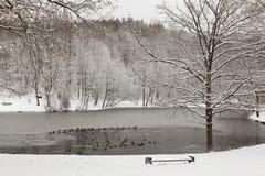 Charca congelada con los patos Fotografía de archivo libre de regalías