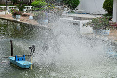 Charca de agua Imagenes de archivo