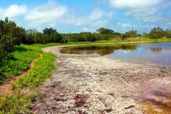 Charca de Eco del parque nacional de los marismas Foto de archivo libre de regalías