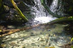 Charca de la cascada Fotos de archivo libres de regalías