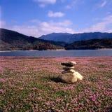 Charca de la flor Imagen de archivo libre de regalías