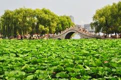 Charca de loto, parque de la ciudad, Changchun, China Fotografía de archivo