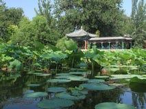 Charca de Lotus Fotos de archivo