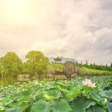 Charca de Lotus en la floración en el mediodía y el pabellón chino Fotos de archivo libres de regalías