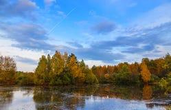 Charca de oro del otoño y árboles amarillos que igualan el rastro de un aeroplano Fotos de archivo libres de regalías