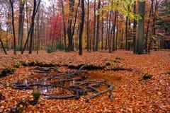 Charca del bosque Imagen de archivo libre de regalías