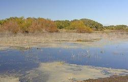 Charca del humedal en el sur Imagen de archivo
