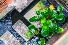 Charca del jardín interior imagen de archivo libre de regalías