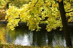 Charca del otoño. Imagen de archivo libre de regalías
