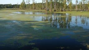 Charca del pantano Fotografía de archivo
