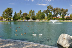 Charca del pato de Temecula Foto de archivo libre de regalías