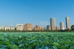 Charca, edificio y cielo de Lotus Foto de archivo libre de regalías